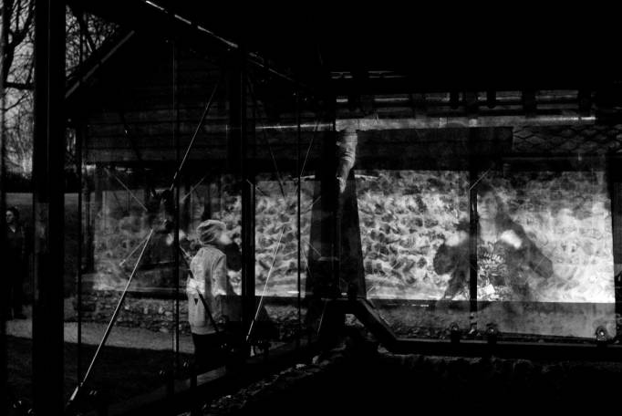 Domus | Site-Specific Video Installation | Dan Farberoff